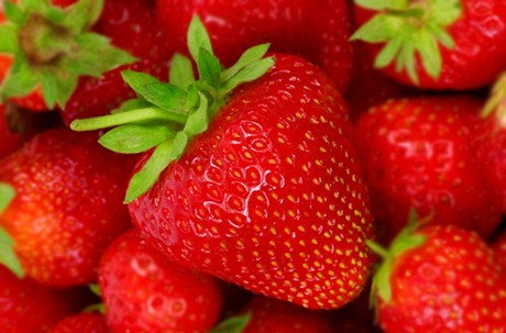 Organic Strawberry Farm (01 Dec ~ 20 May) Ticket / USD 20