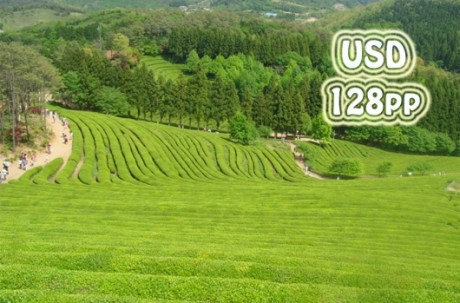 Boseong+Damyang Nature Healing Tour / USD 150