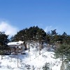 Swiss Chalet Pension : Ski at Alpensia Resort & Yongpyong Resort