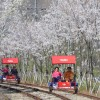 Nami Island+Petite France+Rail Bike Tour / USD55~