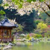 (S) Nami Island+Petite France+Rail Bike+The Garden of Morning Clam / USD69 (KWN76,500)
