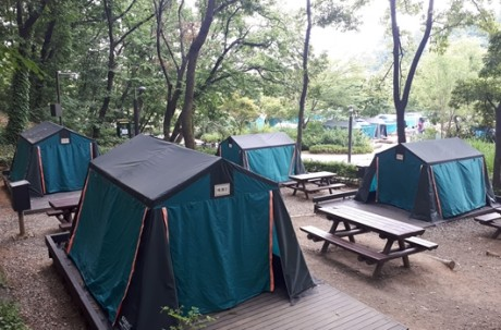 Family Camping + Experience Education + Herb Park (BBQ) / USD 45 – Seoul